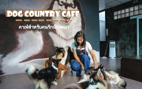 Dog Country Cafe