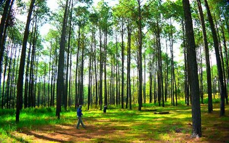 สถานที่ท่องเที่ยวแนวป่าสน